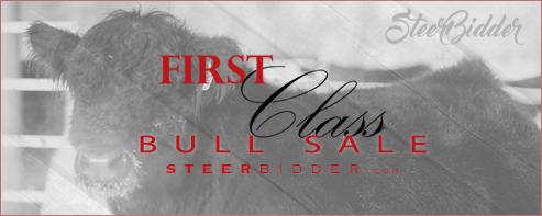 first class bulls_zpsncqttvii